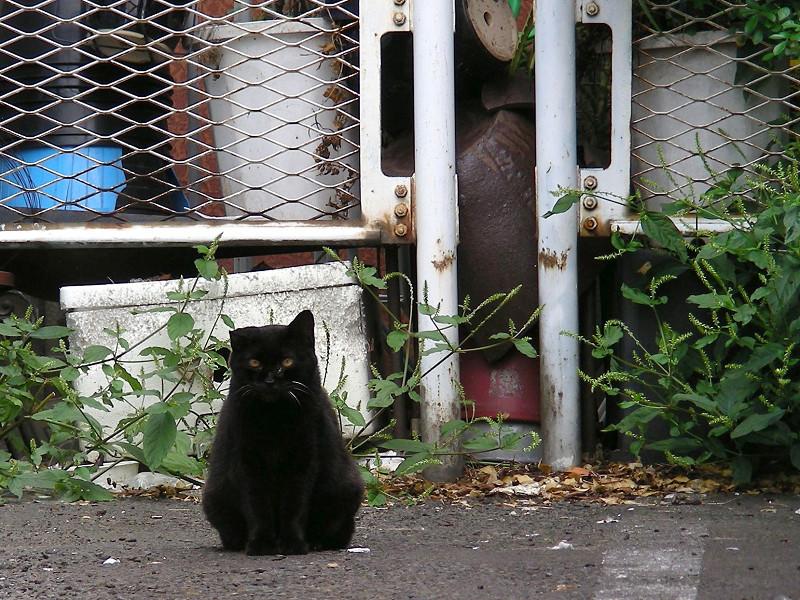 駐車場にいた黒猫2
