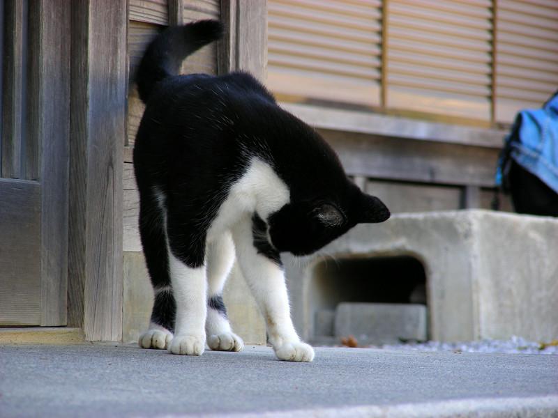 扉前の黒白猫2