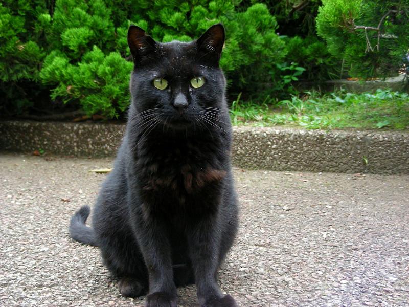 庭園の黒猫3
