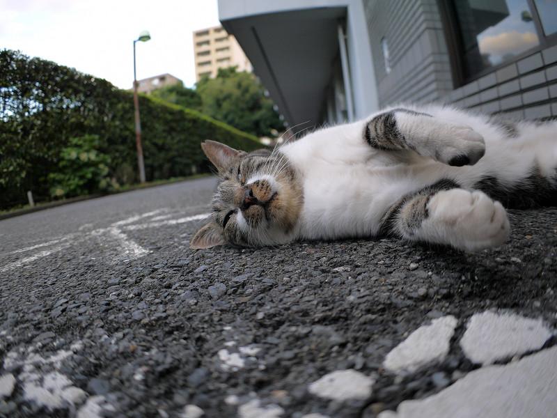 モゾモゾ寝転がるキジ白猫2