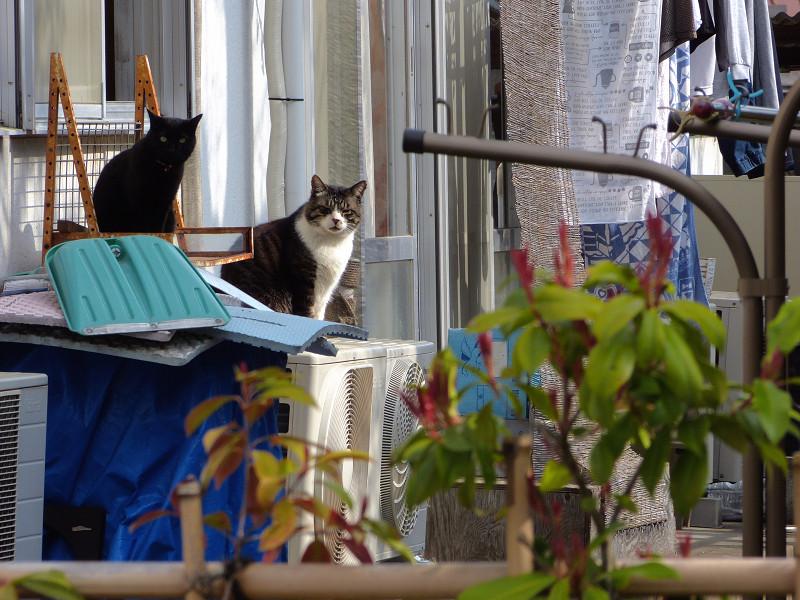 民家窓前の猫たち1