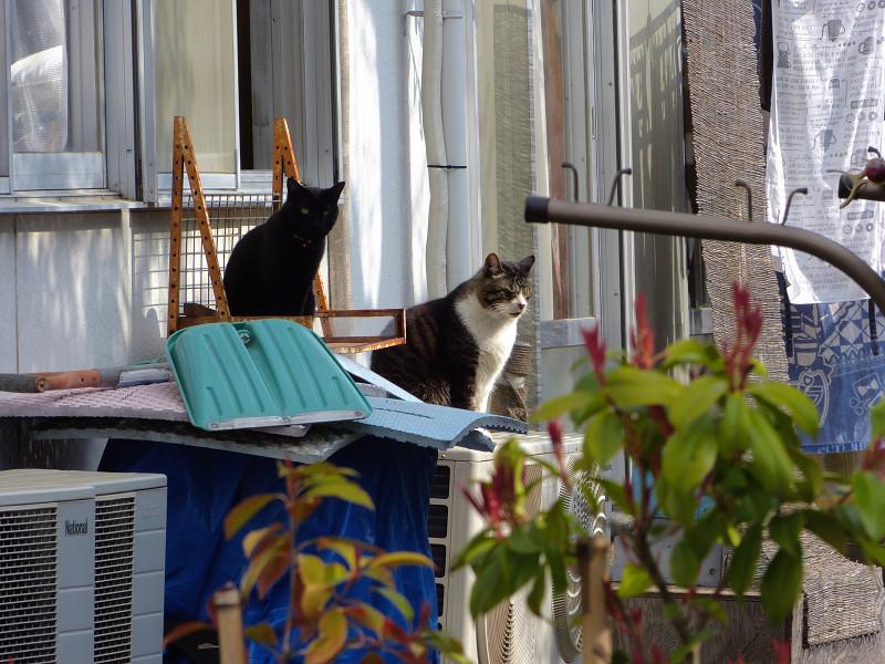 民家窓前の猫たち2