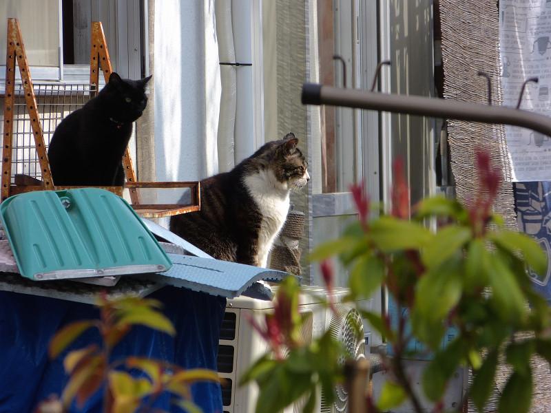民家窓前の猫たち3