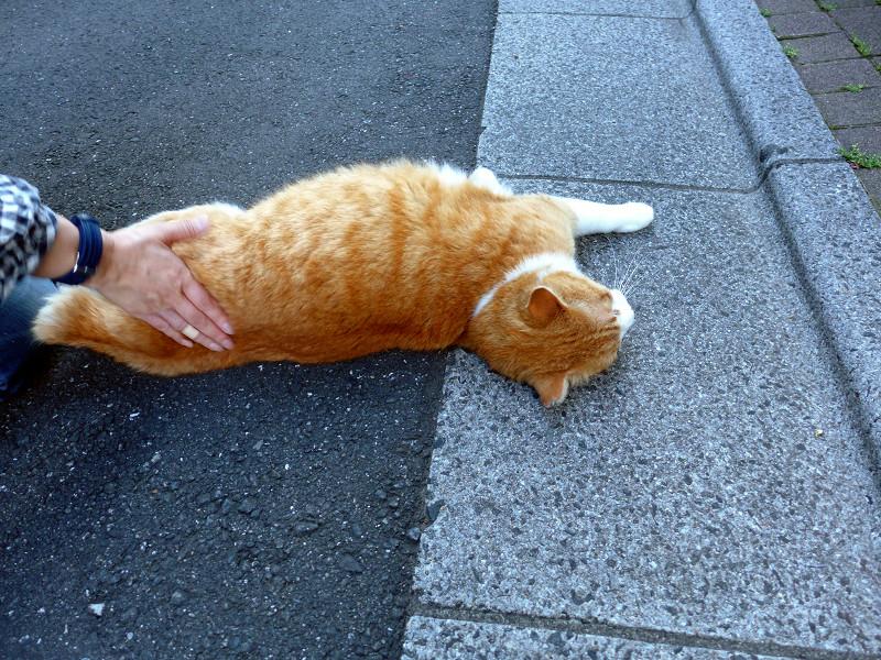 縁石の上で触られる茶白猫1