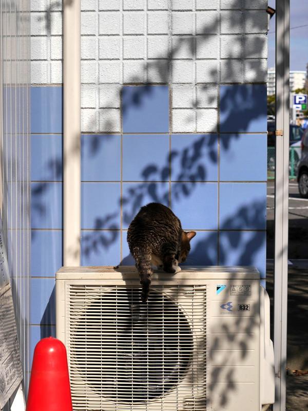 室外機に飛び乗るキジトラ猫2