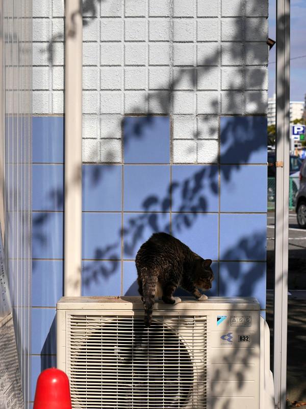 室外機に飛び乗るキジトラ猫3