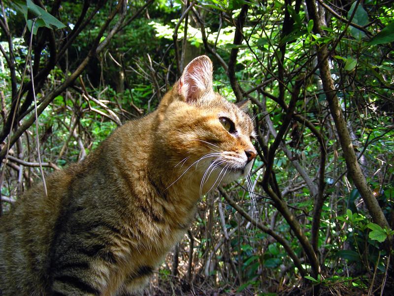 植え込みとキジトラ猫1