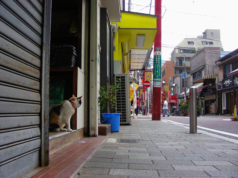 お店から見ている三毛猫1