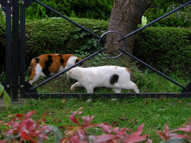 行き違う猫たち1