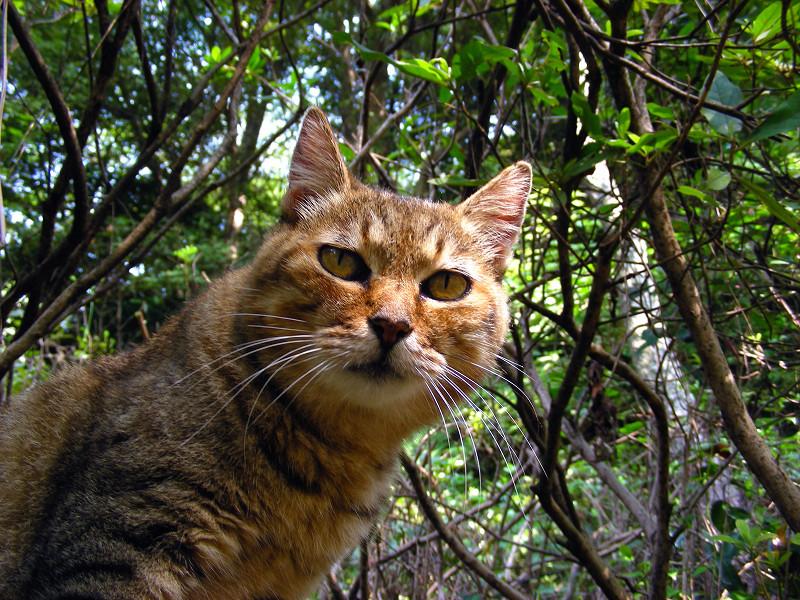 植え込みとキジトラ猫2