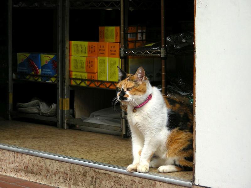 お店から見ている三毛猫2