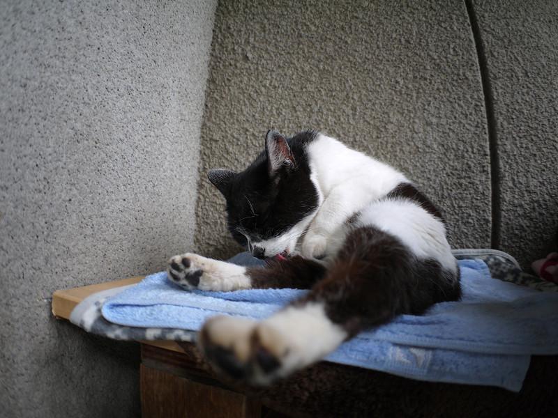 タオルに乗って毛繕いする白黒猫1