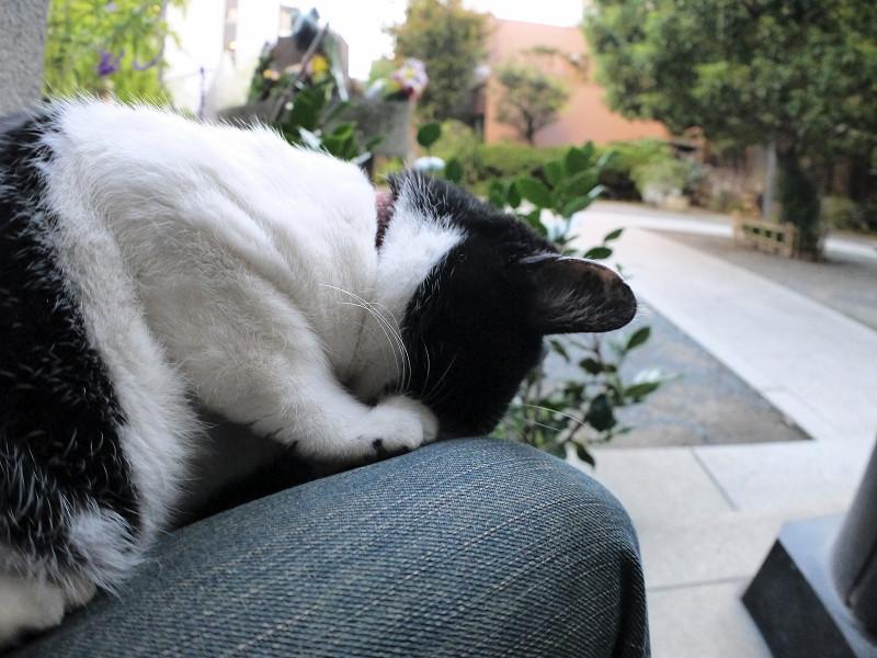 頭を着けて寝ている白黒猫2