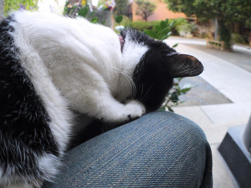 頭を着けて寝ている白黒猫3