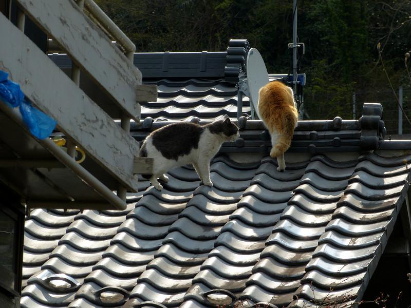 屋根の上の喧嘩猫たち2