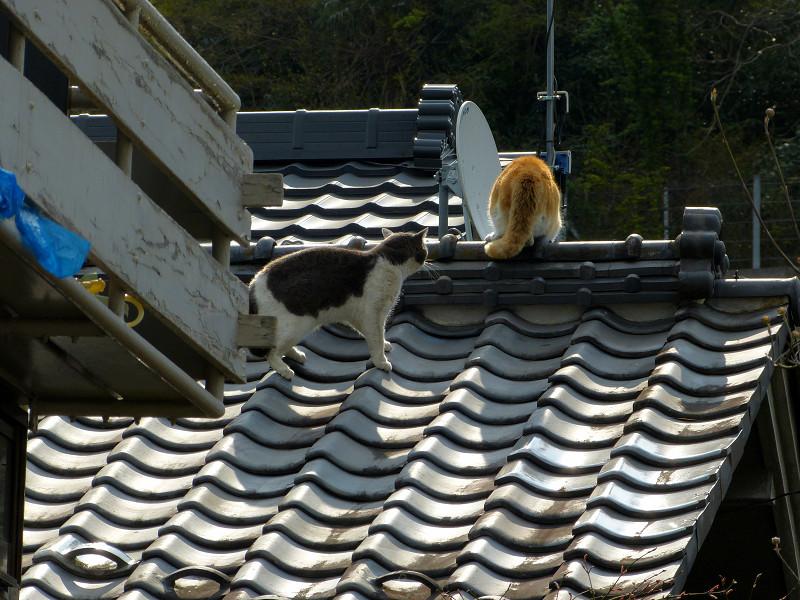 屋根の上の喧嘩猫たち3