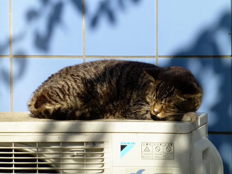 気持ち良さそうに寝てるキジトラ猫
