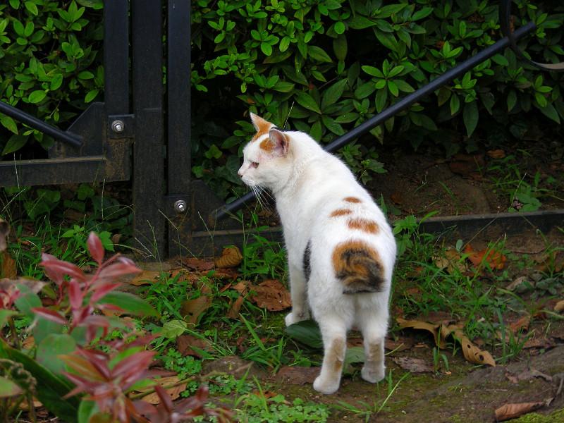 茂みと白三毛猫1