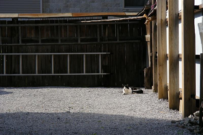 奥まったスペースの黒白猫1