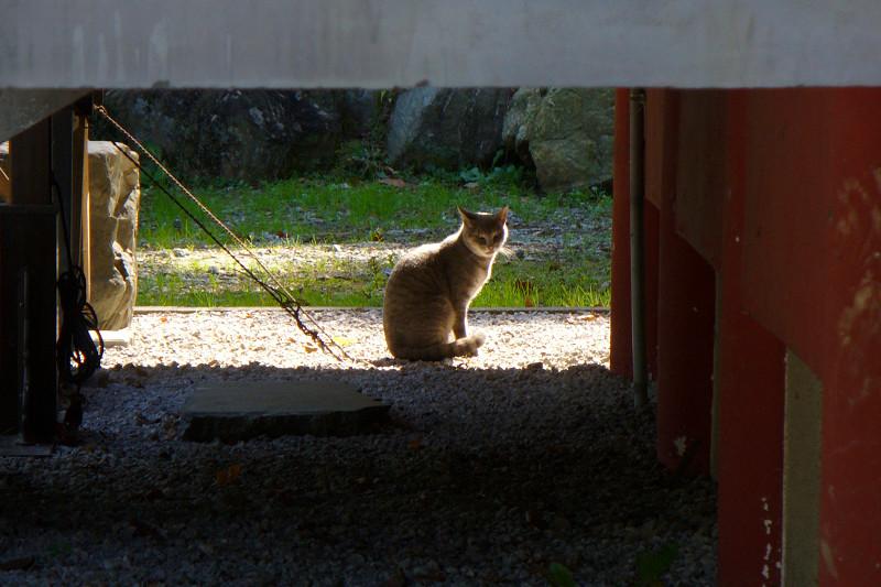 遠くの猫1
