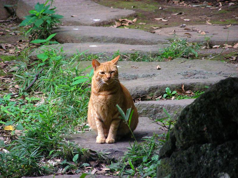 応援の茶トラ猫2
