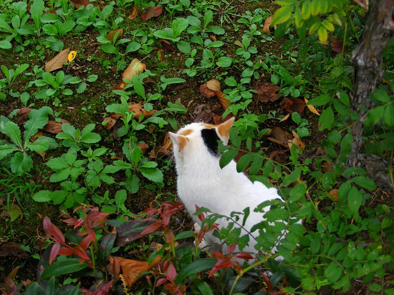 茂みと白三毛猫2