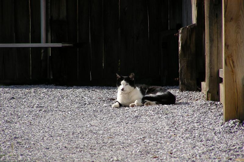 奥まったスペースの黒白猫2