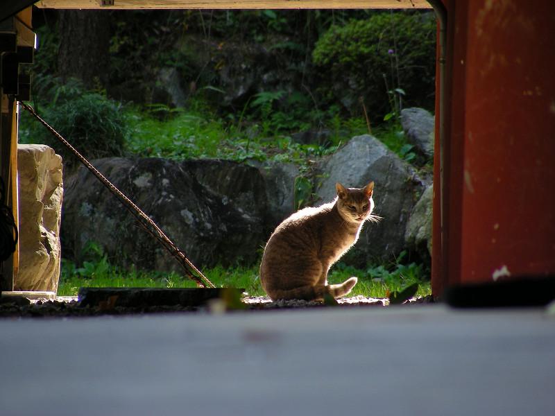 遠くの猫2
