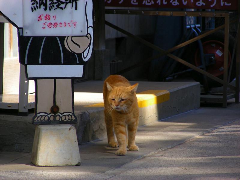 お寺の茶トラ猫3