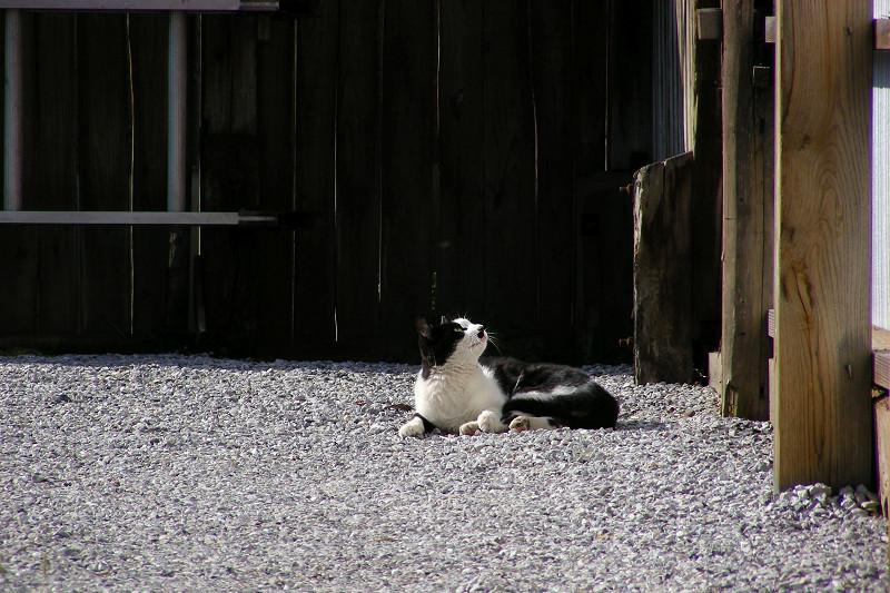 奥まったスペースの黒白猫3