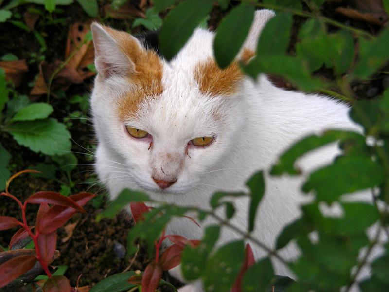 茂みと白三毛猫4