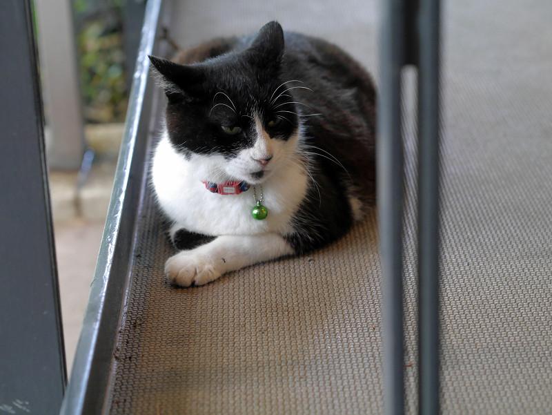 スロープに腹ばってる黒白猫1