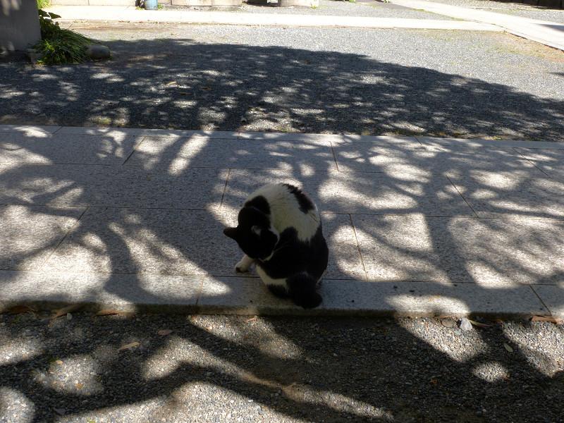 木漏れ日影と白黒猫1