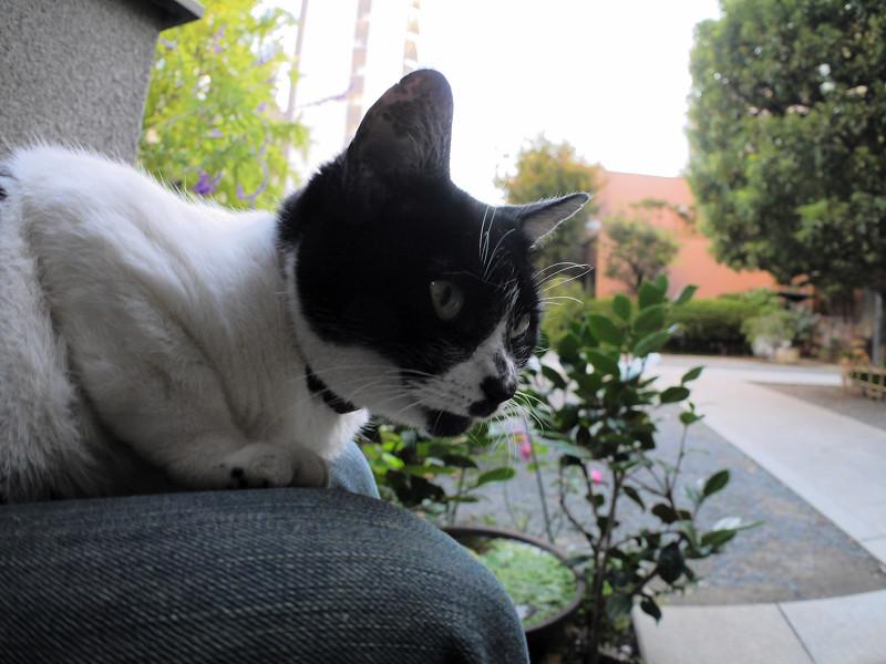 目を覚ました白黒猫1