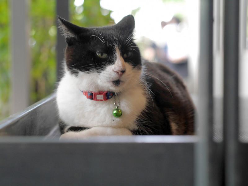 スロープに腹ばってる黒白猫2