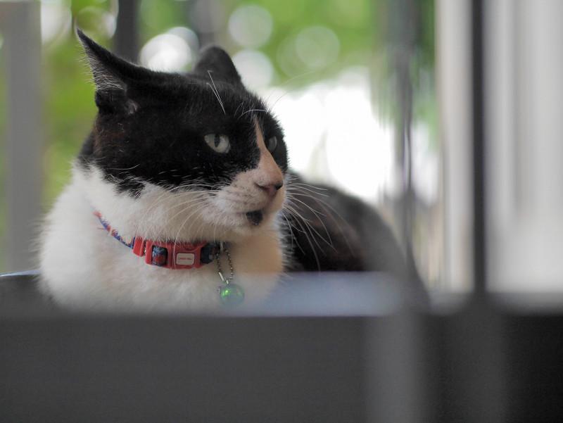 スロープに腹ばってる黒白猫3