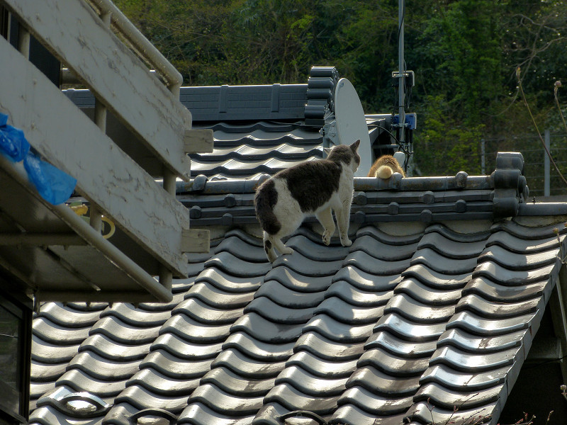 屋根の上の猫2匹1