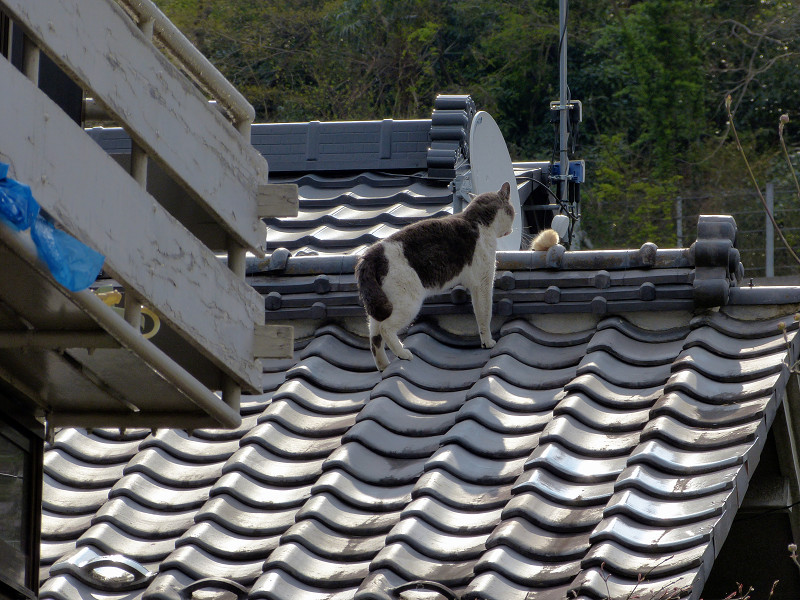 屋根の上の猫2匹2