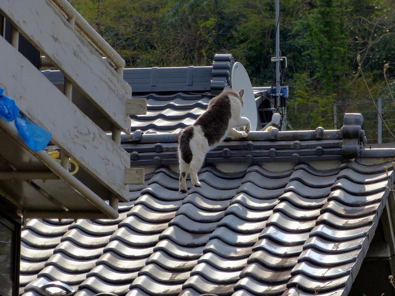 屋根の上の猫2匹3