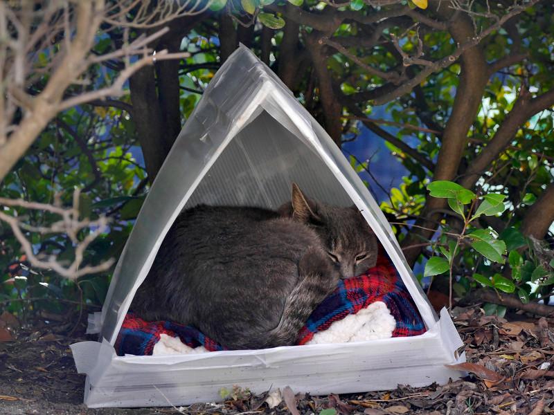 三角ハウスと猫