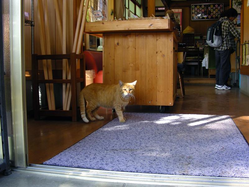 寺務所の茶トラ猫1