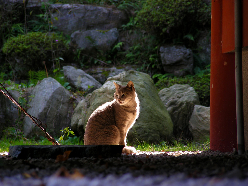 逆光の猫1