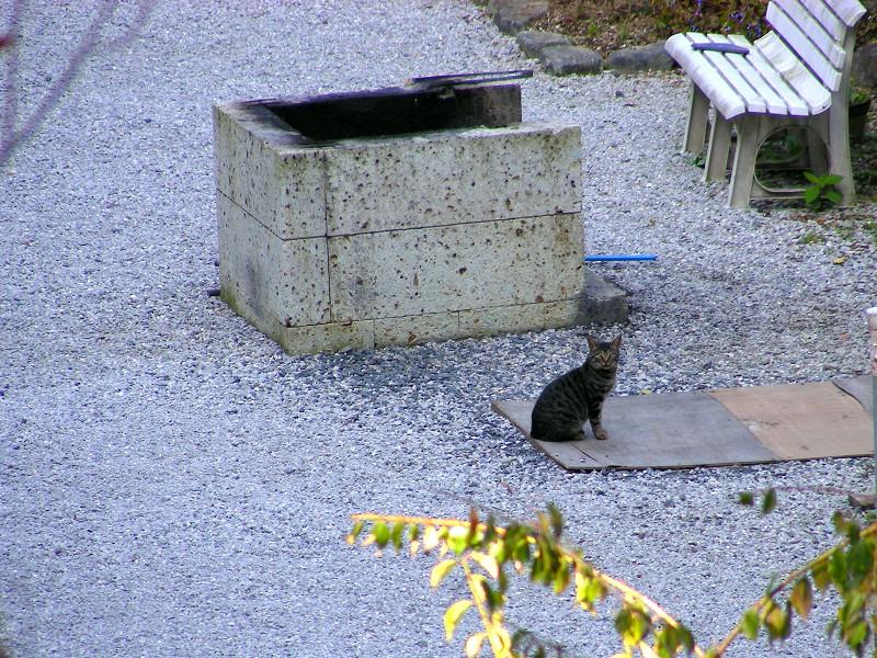 お堂境内の猫1
