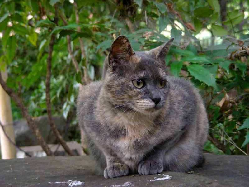 公園の岩の上のサビ柄猫2