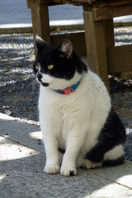 ベンチの前の白黒猫1
