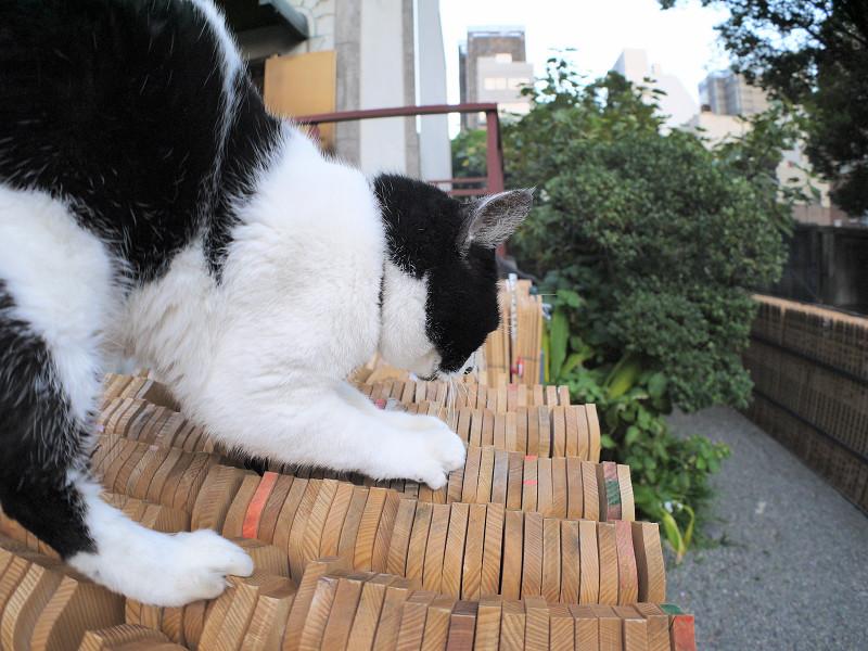 卒塔婆と白黒猫1