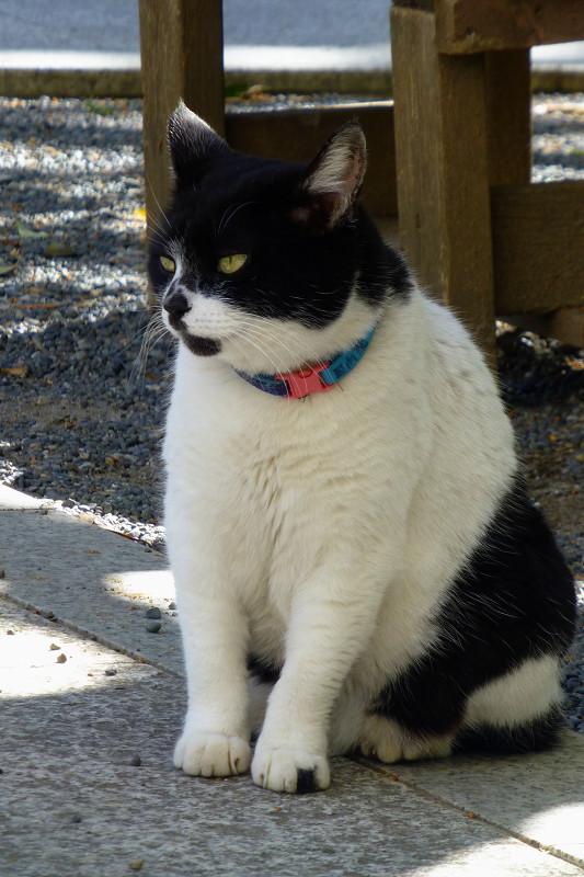 ベンチの前の白黒猫2
