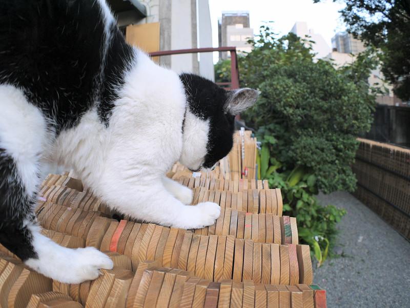 卒塔婆と白黒猫2