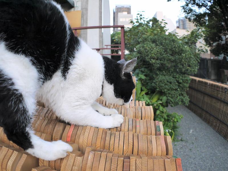 卒塔婆と白黒猫3