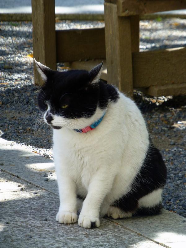 ベンチの前の白黒猫3